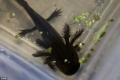 """""""Quái vật nước ngọt"""" được tìm thấy sau tuyên bố bị tuyệt chủng"""