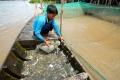 Đặc sản cá linh mất mùa, dân đổ xô đi săn lùng