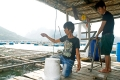 Chính sách hỗ trợ khôi phục sản xuất vùng bị thiệt hại do thiên tai, dịch bệnh