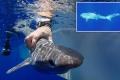 Phát hiện loài cá mập mới ở Đại Tây Dương