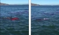 Rùng mình cá mập ăn thịt hải cẩu trước mắt du khách