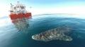 Giải mã bí ẩn của cá mập Greenland