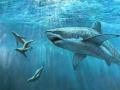Hóa trang tránh cá mập tấn công