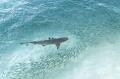 Cá mập: Kẻ săn mồi sắp hết thời?