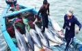 Xây dựng thương hiệu cá ngừ đại dương Bình Định
