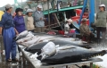 Ngành hải sản nỗ lực