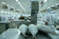 Cần tìm cách nâng chất lượng cá ngừ