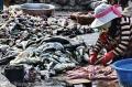 Sẽ dỡ bỏ lệnh cấm khai thác cá nóc