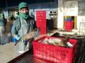 Thay lệnh cấm bằng kiểm soát chặt chẽ cá nóc