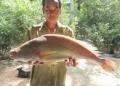 Một ngư dân nghi ngờ bắt được cá sủ vàng, có người trả 200 triệu đồng