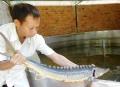 Đối diện với cá tầm Trung Quốc nhập lậu