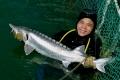 Đầu tư 3 tỉ thu nhập 4 tỉ trên 1 ha mặt nước nuôi cá nước lạnh