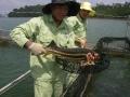 Vì sao cá tầm Trung Quốc rẻ bèo so với cá tầm Việt Nam?