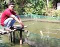 Nhân rộng mô hình nuôi cá thát lát cườm trong vèo