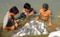 Những loài cá mang lại bạc tỷ cho nông dân