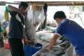Giá cá thu lại giảm mạnh
