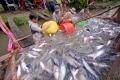 Tìm hướng đi bền vững cho ngành cá tra