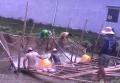 Nuôi cá tra xuất khẩu với mật độ thưa để đạt hiệu quả cao hơn