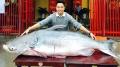 Cận cảnh cá dầu hơn 160 kg xuất hiện tại Hà Nội