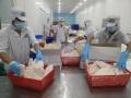 Hùng Vương lên kế hoạch lãi 400 tỷ đồng năm 2017, cổ phiếu HVG tăng kịch trần