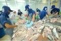Giá cá tra nguyên liệu tiếp tục tăng