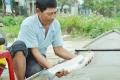 Sơn Tịnh: Trúng đậm vụ cá lồng bè