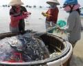 Mùa cá trích biển Tây Nam