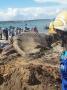 Cá voi 15 tấn chết dạt vào biển Bình Thuận