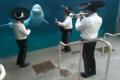 10 khám phá gây sốc về cá voi