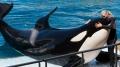 Cá voi sát thủ biết bắt chước tiếng người