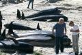 Hàng chục cá voi chết bí ẩn trên bãi biển Tây Ban Nha