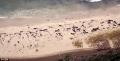 Phát hiện hàng chục cá voi hoa tiêu chết bí ẩn ở đảo xa