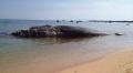 Độc đáo bộ xương cá voi dài 17m ở đảo Phú Quí