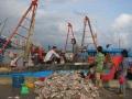 Thị trường thủy sản rối loạn vì thương nhân Trung Quốc