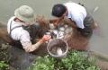 Hà Tĩnh: Nhân rộng mô hình nuôi cá rô phi Cát Phú