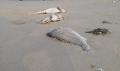 Thủy, hải sản chết: Xem xét miễn, giảm lãi vay cho ngư dân bị thiệt hại
