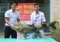 """Cận cảnh cá Chiên """"khủng"""" giá 40 triệu đồng tại Hà Nội"""