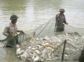 Bắc Giang: Cải tạo hạ tầng thâm canh thủy sản
