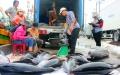 Giá cá ngừ đại dương chỉ còn 90.000 đồng/kg
