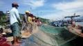 Ngư dân phấn khởi vì được mùa cá cơm