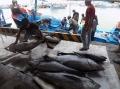 Trúng đậm cá ngừ đại dương
