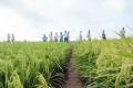 Doanh nghiệp thép, thuỷ sản đi làm lúa gạo