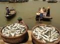 Cấp hạn ngạch đánh bắt thủy sản: Muốn thực hiện phải hỗ trợ ngư dân