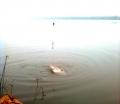 Câu cá ngạnh sông – cuộc săn cá vô cùng kỳ thú