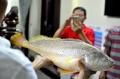 Câu được cá nghi là cá Sủ vàng quý hiếm