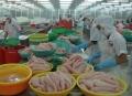 Xuất khẩu cá tra không phải đăng ký qua Hiệp hội