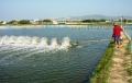 Hạn hán ảnh hưởng đến nuôi trồng thủy sản