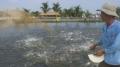 Không quản lý chất cấm - nguy cơ vỡ trận cá tra