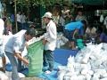 Nâng cao chất lượng sản xuất tôm giống