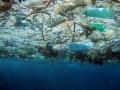 Chất thải nhựa trên biển: Hiểm họa cận kề